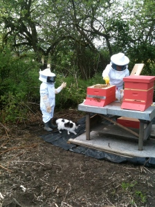 Two new beekeepers learning together.