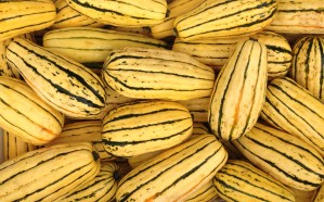 "Tasty, golden ""Delicata"" Squash, also known as ""Sweet Potato"" or ""Peanut"" Squash. Mmmm."