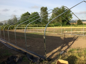 The new greenhouse is nearly done. It just needs the skin and end walls. So close!