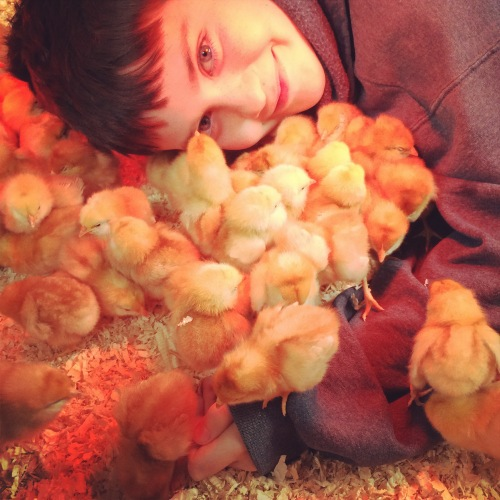 Cosmo, the Chick-Whisperer. 100 baby laying hens.