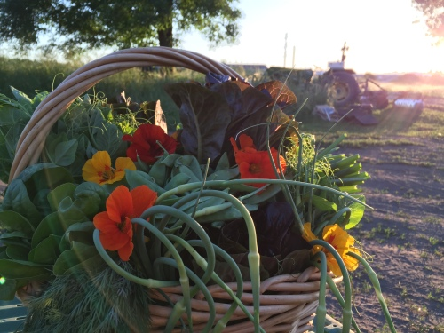 First Week of Summer CSA.  (Lovely photo courtesy Shawna at Sweet River Photography)