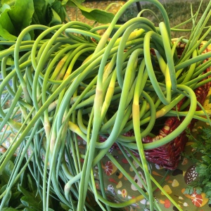 Garlic Scapes are extra early this year...and there are enough this week for CSA members! Click on the menu link for cooking hints!