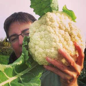 The Brassicas this fall are stunning—it's been a challenge to keep the cauliflower heads and broccoli crowns at a manageable size. This one was easily bigger than my head. They're delicious this time of year though, so eat up. So far, no frost!
