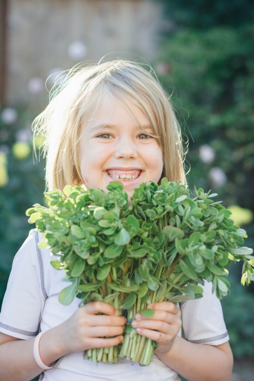 Lia loves her purslane!