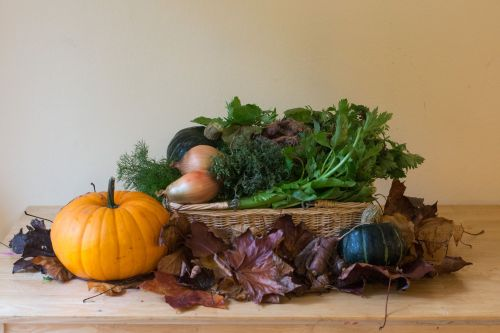 The last CSA week of Fall. Plus a pumpkin from our CSA-only U-Pick patch.
