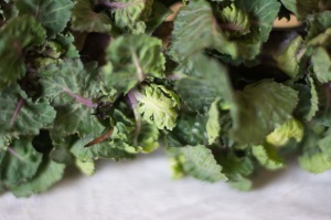 A natural cross between Brussels sprouts and red kale, Kalettes grow up a tall stalk like Brussels sprouts, but they form rosettes of leaves instead of tiny cabbages.