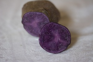 These purple tubers are a highly-nutritious potato! Adirondack Blue are purple all through, and stay purple after they're cooked.
