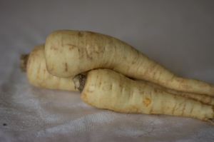 Parsnips are a very slow-growing relative of carrots and celery, and after a good freeze or two in the ground, they are sweet and delicious roasted, fried, or mashed.