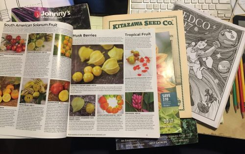 My desk is covered in seed catalogs. I've taken care of ordering seeds for the staple crops, but now the fun begins. 10 kinds of Solanum berries, 5 kinds of Andean tubers, purple Napa cabbage, green daikon radish. There are so many things to eat!